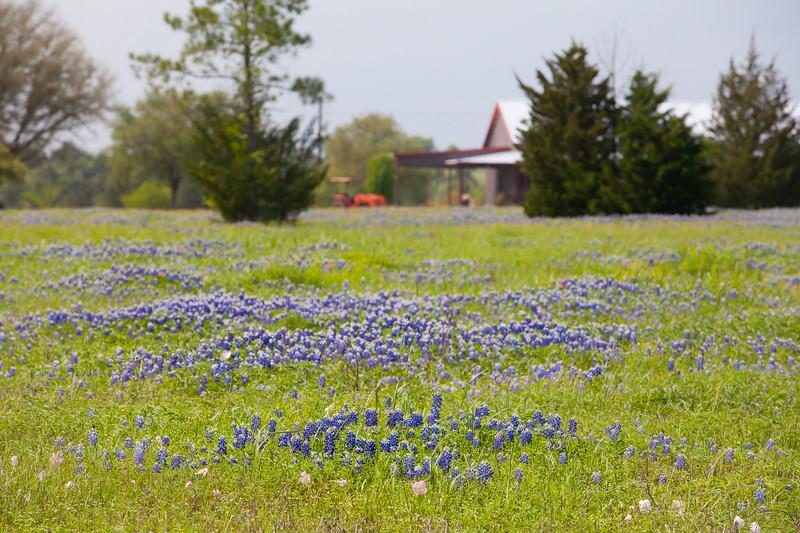 2015_4_3 Texas Wildflowers-7867.jpg