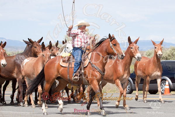 Jake Clarks Mule Days Parade