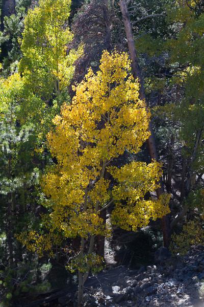 2010 09 18 Estes Park RMNP 086.jpg