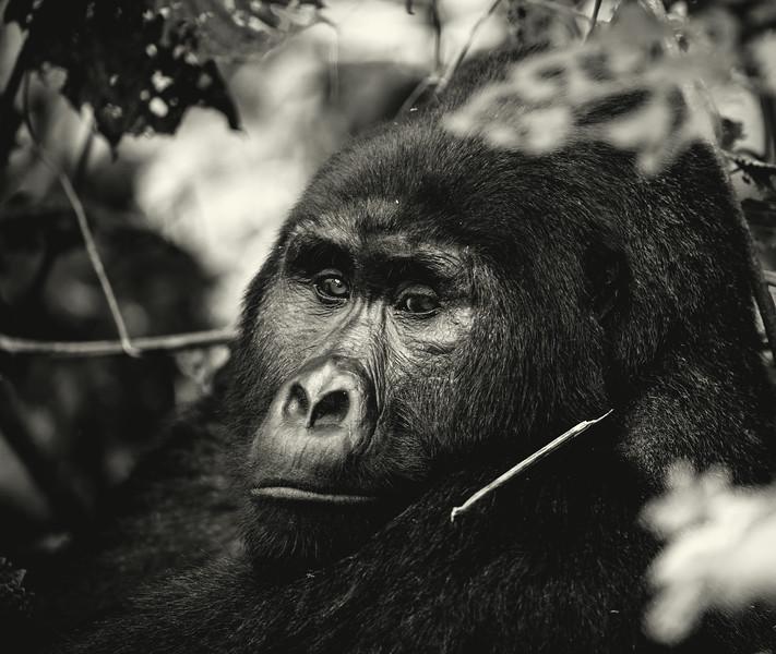 Uganda_T_Gor-2308.jpg