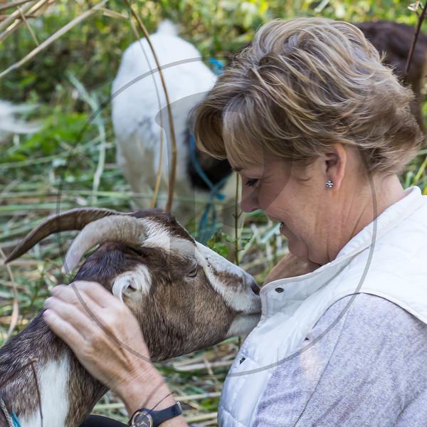 Goats-130.jpg