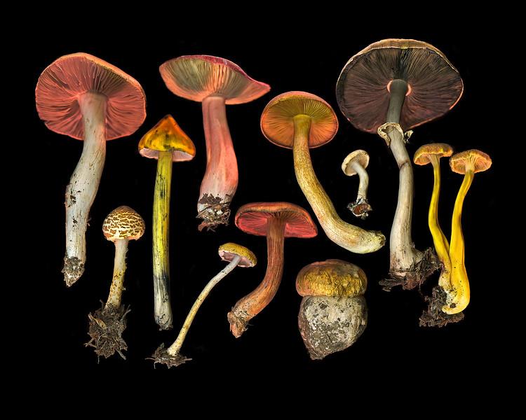 Wild Mushroom Medley #23