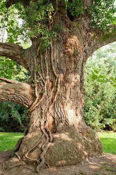 tree 29 .jpg