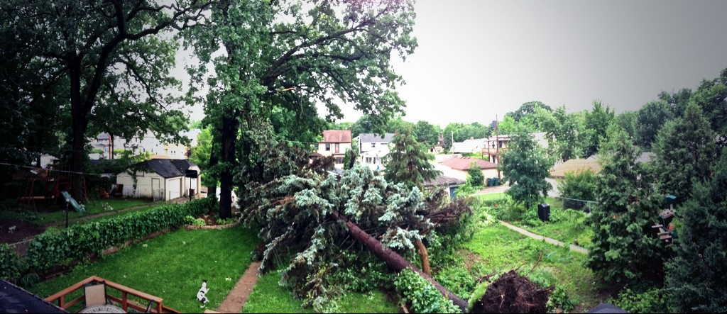 . A large pine tree fell in a St. Paul back yard. (Photo courtesy of Nathan Berndt)