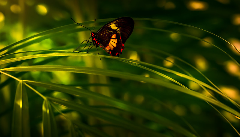Butterfly-188.jpg