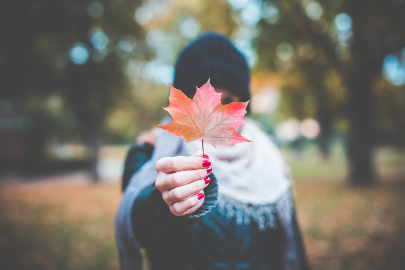 young-girl-holding-autumn-colored-maple-leaf-2-picjumbo-com.jpg