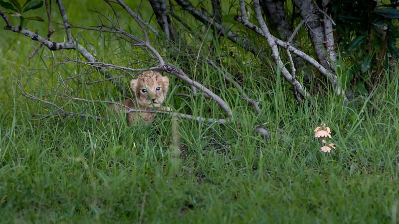 Lions-0101-5.jpg