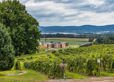 Vyneyards Winery, Alburtis, 8-20-21 (M5)
