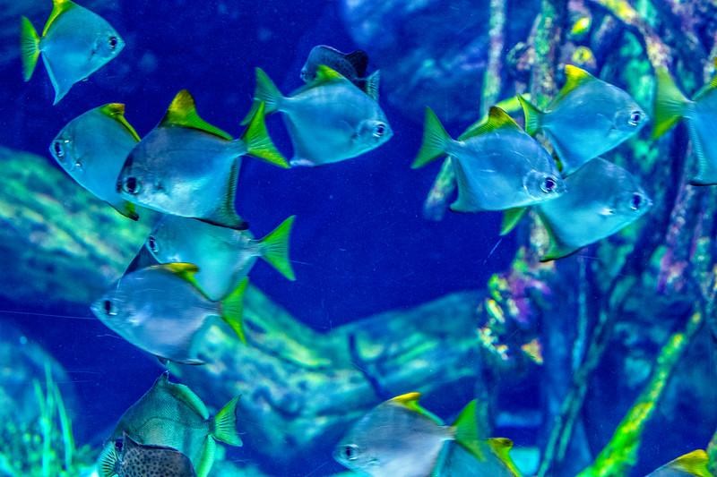 GA Aquarium with Linc, Ali & Abe-128.jpg