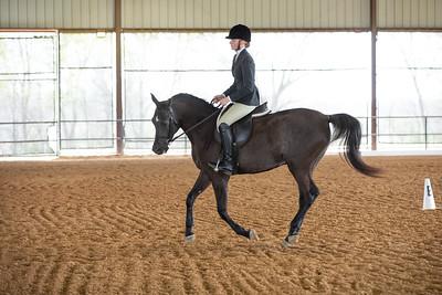 Horse 485