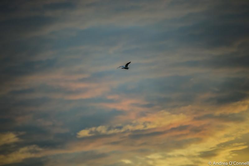 sunrisein sky5.jpg