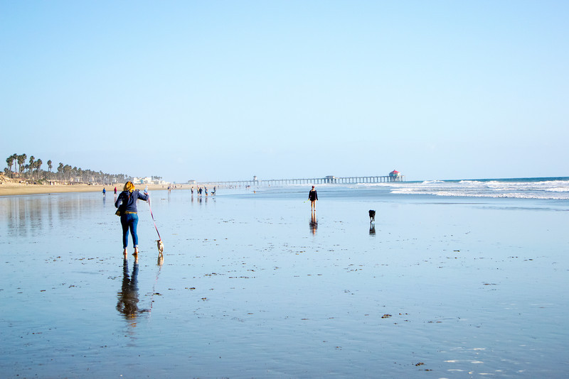 dogs_beach-8.jpg