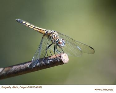 Dragonfly42661.jpg