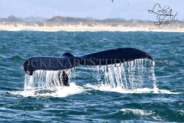 Whale Watching and Marine Life
