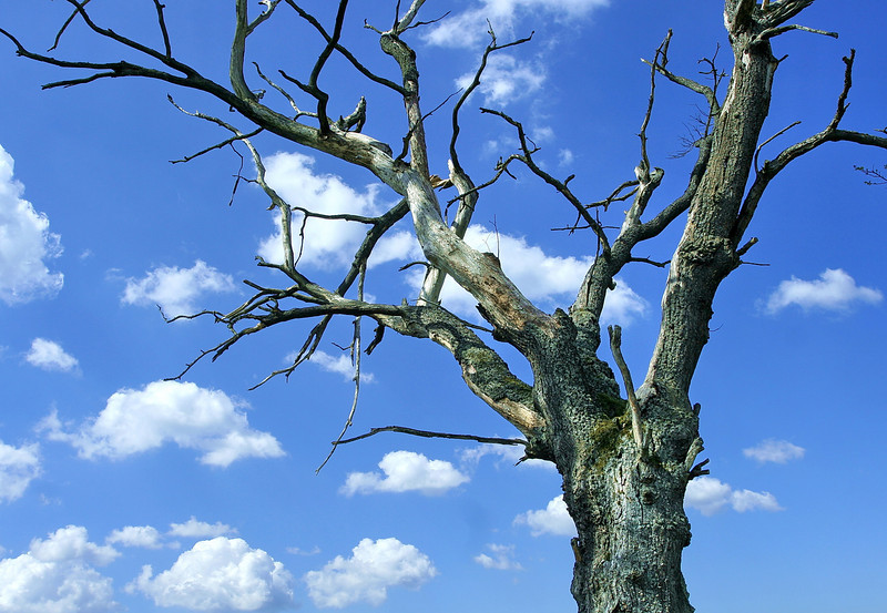 tree 10 .jpg