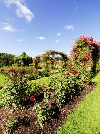 Rose Garden_June 14, 2012