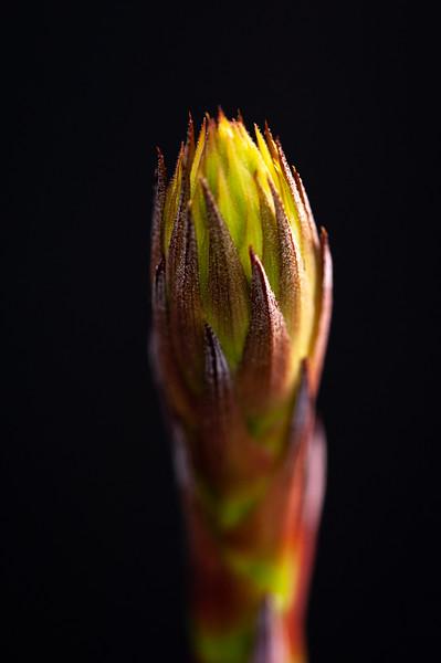 flower 030620-1831.jpg
