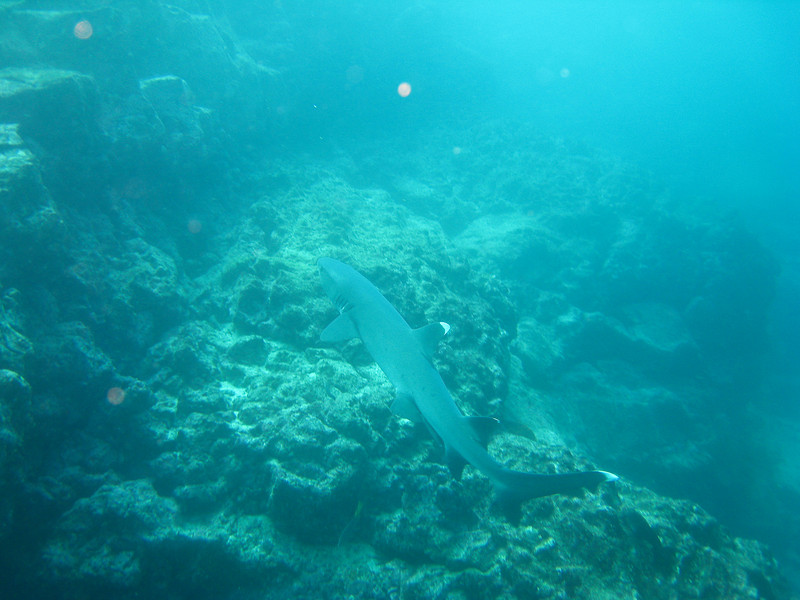 Diving in the Galapagos (129 of 392)