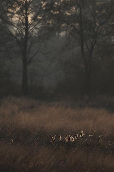 20141026-DSC_6963.jpg