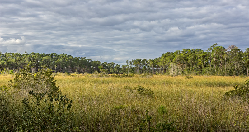 Sawgrass wetland at Split Oak Forest