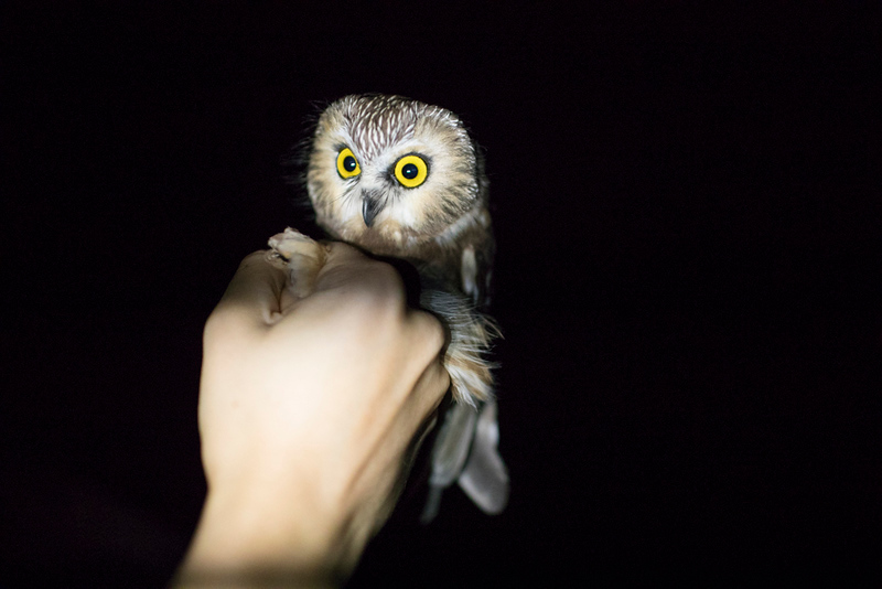 CIK-181012-Owls-API_6547.jpg