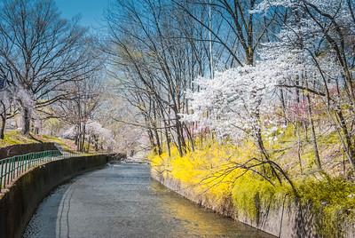 Branch brook Park NJ
