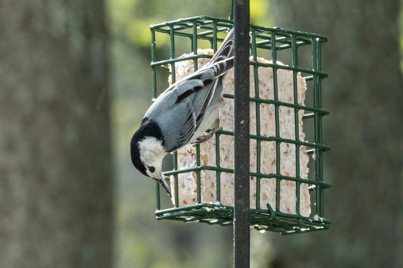 birdfeeder-7198.jpg