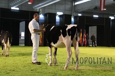Verona Holstein Jr 2014