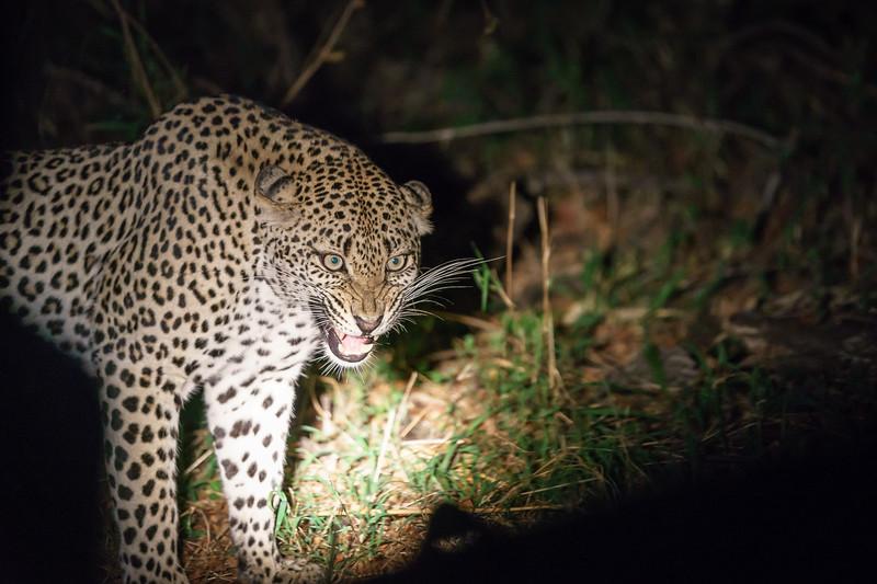 LeopardHills-20171022-1118.jpg
