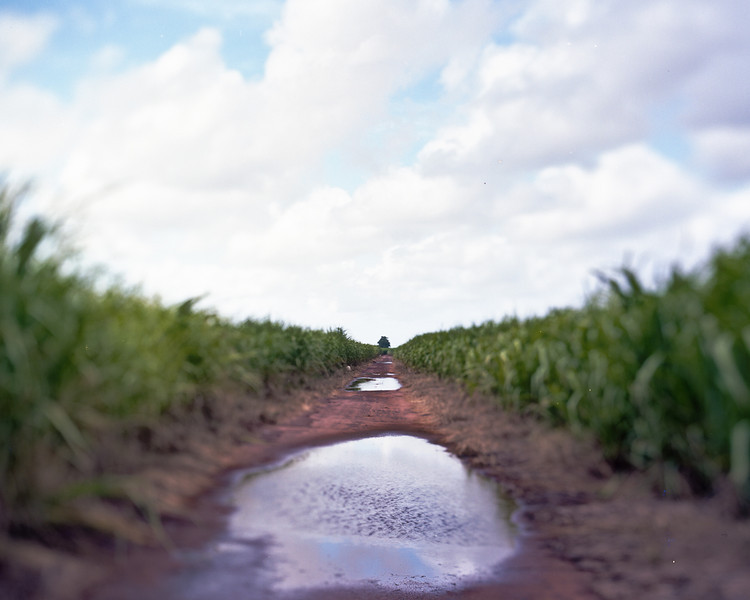 CaneRailway-1.jpg