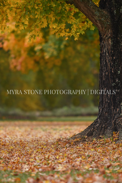 Fall Background_2.JPG