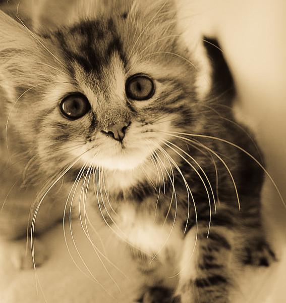 LW10_kittens_24.10.10_211.jpg