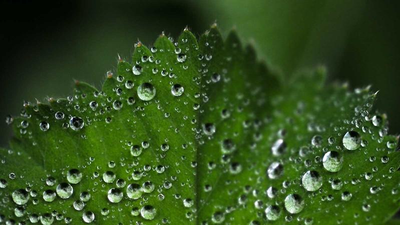 or flr rain 900v 34 (1 of 1).jpg