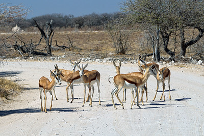 NAMIBIA - NAMUTONI