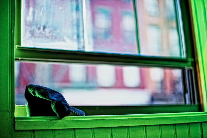 Black Cap, Green Window