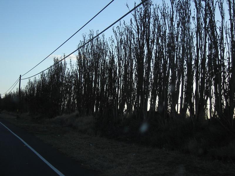 20060117_008533.JPG