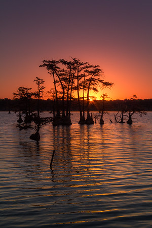 Reelfoot Lake in Color