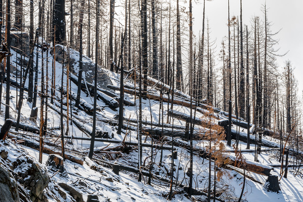 Ferguson Fire 2018 - Yosemite NP California Area