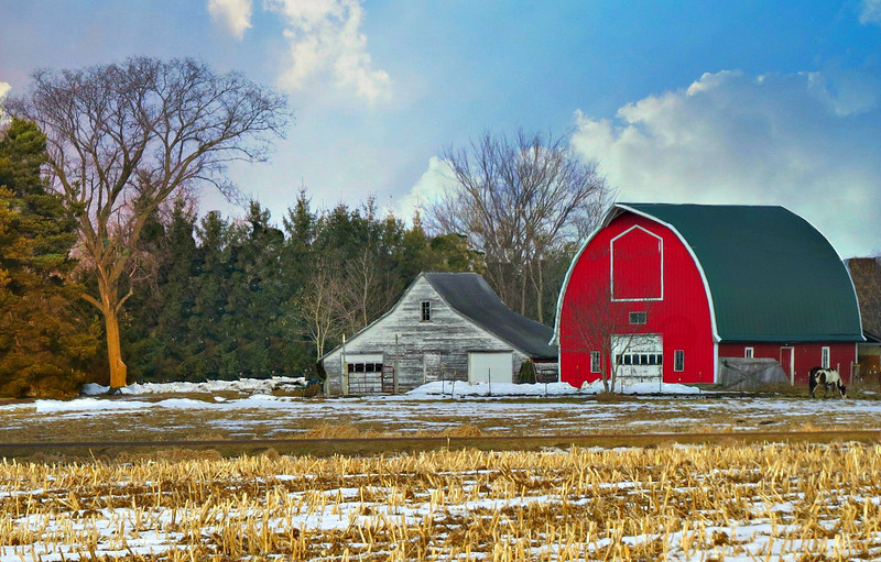 RED BARN WITH HORSE