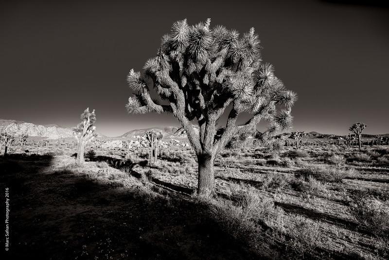 0416_Joshua_Tree-59.jpg