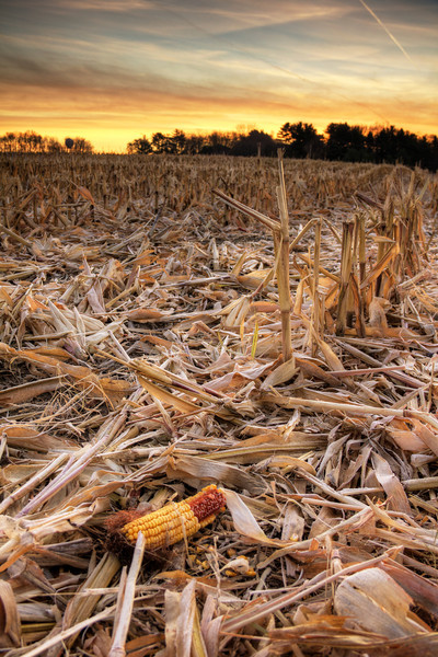 Harvest_tonemapped.jpg