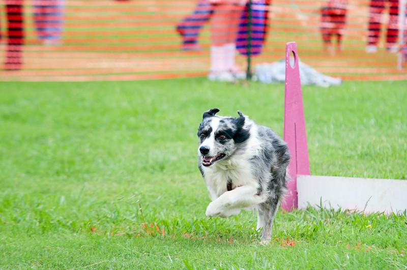 2011 Bark in the Park-174.jpg
