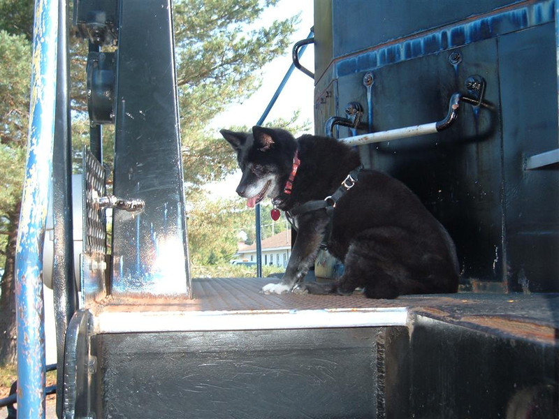 Reagan the dog checks out the engine on the train.  August 2012