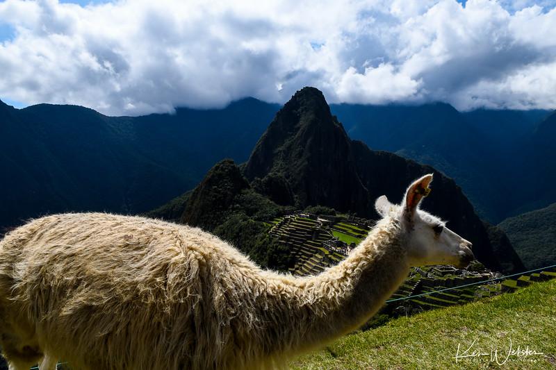 2018 Machu Picchu-46.jpg