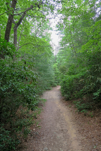 Thrift Cove Trail -- 2,300'