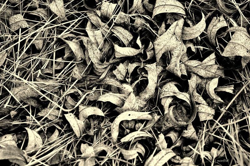 brittle carpet 3-1-2012.jpg