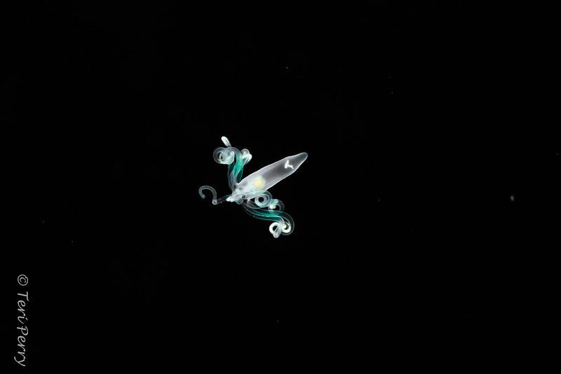 BLACKWATER - Anemone-0707-Edit.jpg