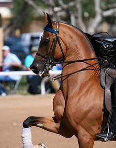 2009 Scottsdale Arabian Show