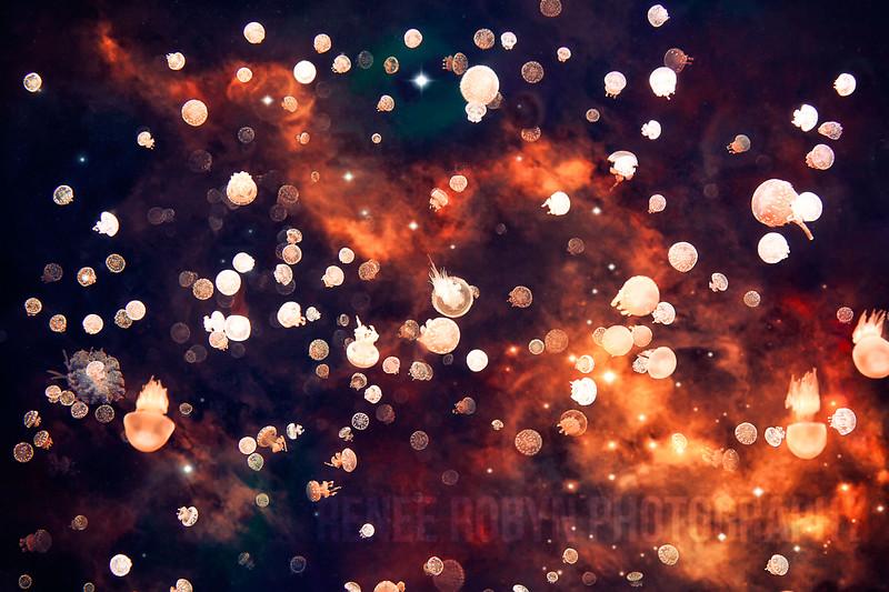 Jellyfish_6215WEB.jpg