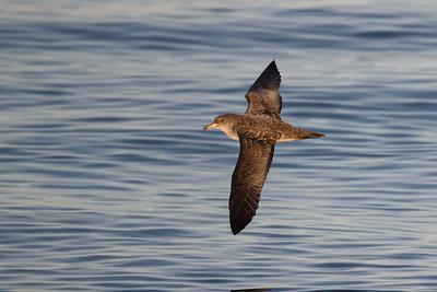 Gulls And Seabirds